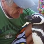 Every Year, This Penguin Swims 5,000 Miles To Reunite With The Man Who Saved His Life