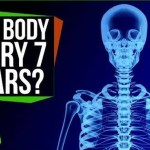 Do You Really Grow a New Body Every 7 Years?