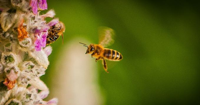 To spread public awareness about how bee colony collapse is threatening the nation's food supply—and the role that chemicals play in their demise—a truck driven by Minnesota beekeeper James Cook is currently hauling 2.5 million dead bees across the country. (Photo: Mickey Faulkner/cc/flickr)