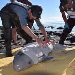 Kids Rescue Newborn Beluga Whale With Quick-Thinking