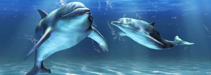 Whales and Dolphins Mourn Their Dead, Just Like Us