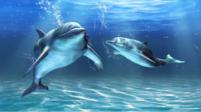 Dolphins swimming-compressed
