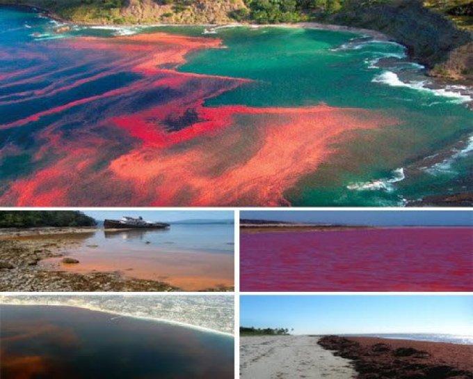 Florida Red Tides