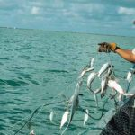 """Global Fish Stocks Are Practically Depleted: 90% Are """"Fully Fished"""" or """"Overfished"""""""