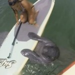 Girl On Paddleboard High Fives A Manatee: Must-See Summer Video Will Make You Smile