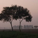 New Documentary Shows That Trees Communicate and Form Relationships