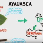 """Your Brain On Ayahuasca – A Scientific Look at the Effect of the Popular """"Spiritual Drug"""""""