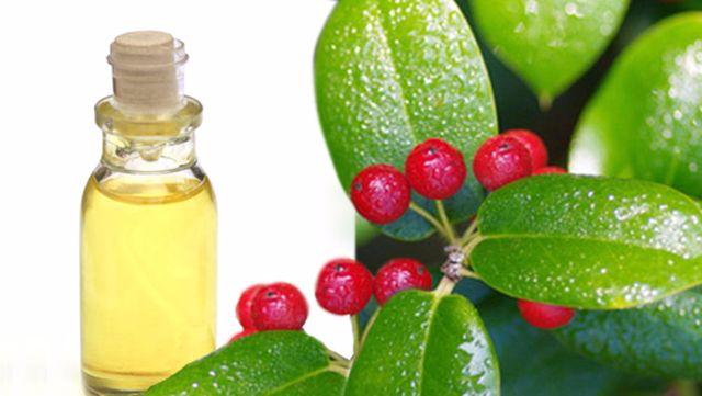wintergreen-oil