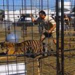 Video Of Tiger Being Whipped Shows Why Animals Shouldn't Be In Circuses [Watch]