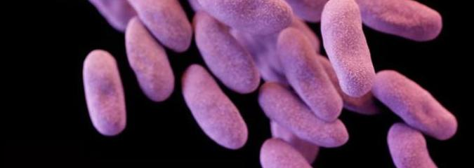 WHO Urges Quick Development of Antibiotics to Combat Superbugs