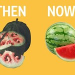 What Fruits And Veggies Looked Like Before Humans Domesticated Them [Watch]