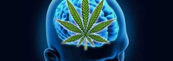 Study Finds Cannabis Reverses Aging Processes in the Brain