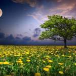 Intuitive Astrology: What June's Sagittarius Full Moon Means for You