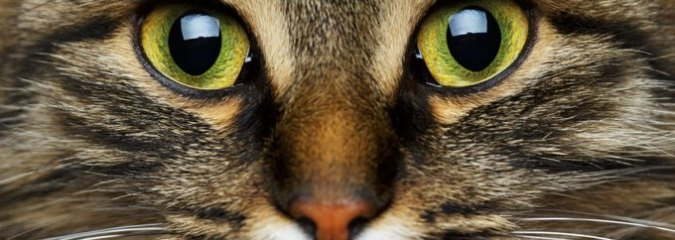 "Can Cats and Dogs See ""Spirits""? Science Has Confirmed They Can See Frequencies We Can't"