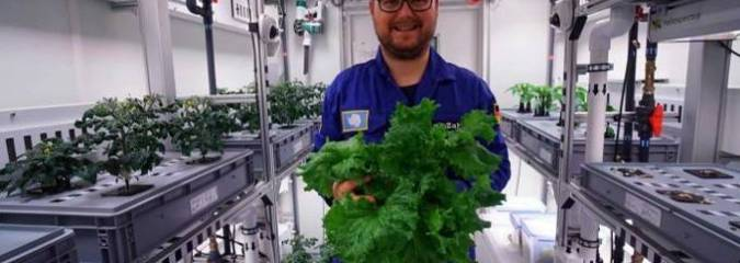 Without Soil or Sunlight, Scientists Harvest First Vegetables in Antarctic Greenhouse