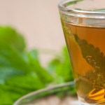 Help Detoxify Your Body With Stinging Nettle