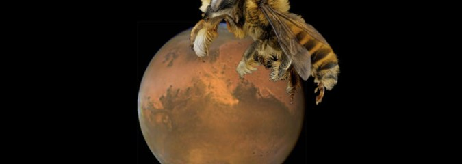NASA Funds Project to Put Robot Bees on Mars