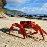 The Water In The Pacific Ocean Is So Acidic It's Dissolving Dungeness Crab Shells