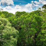 Urging Multi-Pronged Effort to Halt Climate Crisis, Scientists Say Protecting World's Forests as Vital as Cutting Emissions