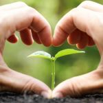 The Seeds of Intention