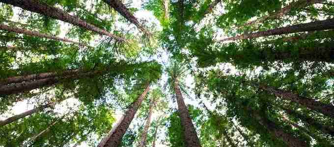 A Massive Restoration of the World's Forests Would Cancel Out 10 Years of CO2 Emissions