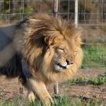 Bill to Ban Circus Animal Suffering Set for Introduction in US Congress