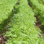 Thriving Hemp Industry Is About to Create a Jobs Boom In The U.S.