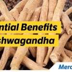Ashwagandha May Reduce Anxiety and Stress