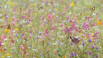 By Planting Stripes Of Wildflowers Across Farm Fields Pesticide Use Could Be Slashed