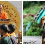 As A Birthday Gift To Its King, Bhutan's Prime Minister Asks People To Adopt Stray Dogs Or Plant A Tree