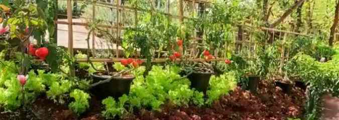 7 Reasons to Have a Vegetable Garden