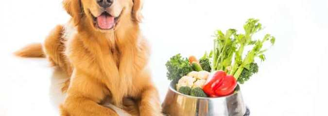 Pet Nutrition: Ways To Keep Your Dogs Healthy During This Crisis