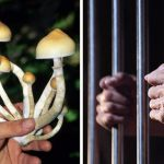 Expert Issues Warning: Decriminalization of Psychedelics is Not What You Think It Is