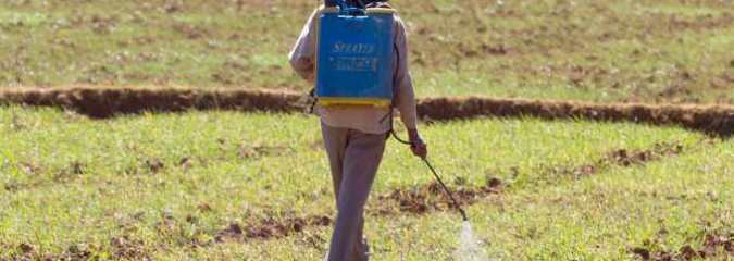 Pesticides Poison More Than 378 Million Farmers and Farmworkers Every Year, Report Says