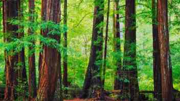 Large Privately Owned Redwood Forest Is Preserved in $24.7 Million Deal