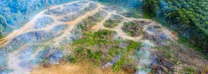 'We're Destroying Our Life-Support Systems': Study Suggests the Amazon Now Contributes to Warming