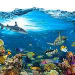 Scientists: As Marine Life Flees the Equator, Global Mass Extinction is Imminent