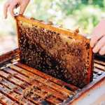 EPA Inaction Blamed as US Bees Suffer Second Highest Colony Losses on Record