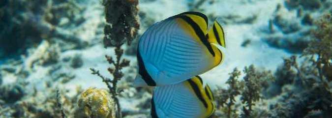 'Momentous' Moratorium on Deep Sea Mining Adopted at Global Biodiversity Summit