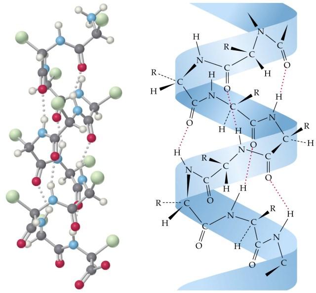 Molécule de KERATINE d'après WIKIPEDIA