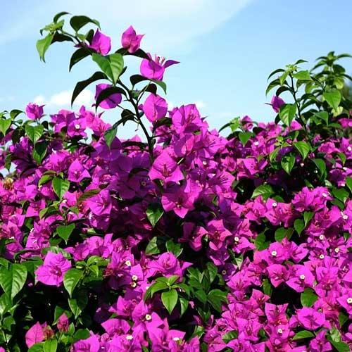 5 arbustes a planter en plein soleil
