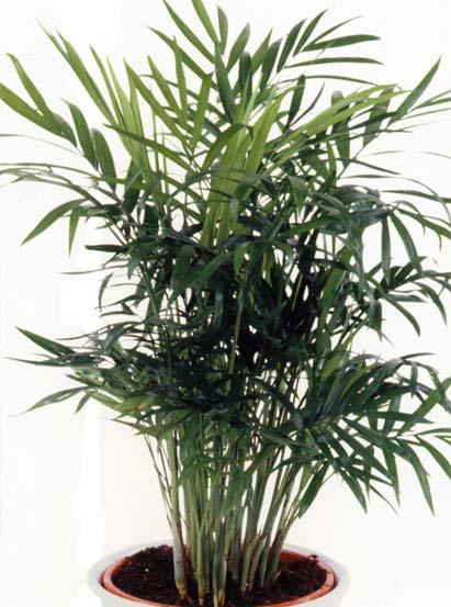 Le beau jardin des astuces pour bien conserver et soigner vos plantations