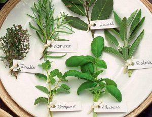 cuidados_plantas_aromaticas_ampliacion
