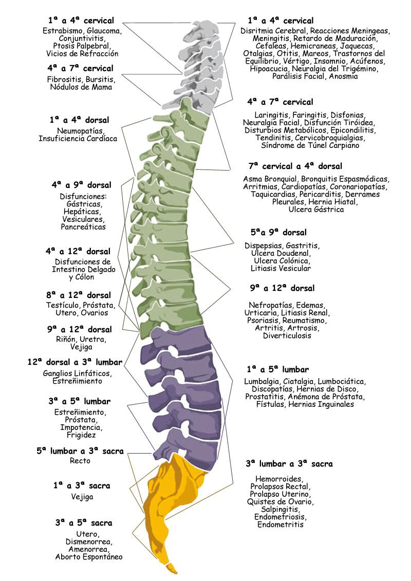 columna-total