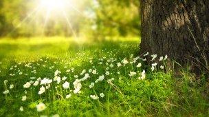 Somos feitos semelhança de Deus - Imagem de luz refletindo em paisagem verde