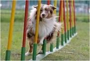 dog-agility