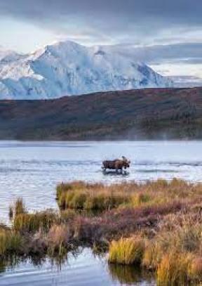 Alaska Travel, Denali & Kenai Fjords Experts | Alaska Collection