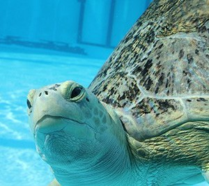 Celebrate World Turtle Day & Everyday