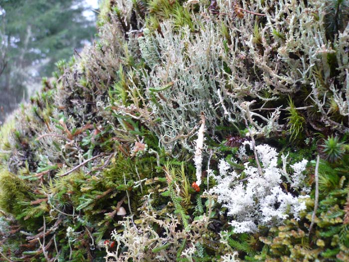 Packford-Various moss and lichen-Torrey-Archer-700x525