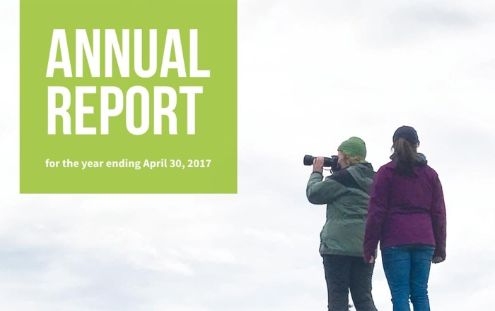 annual-report-1240x700